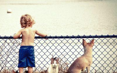 Μαμά, μπαμπά να υιοθετήσουμε ένα ζωάκι;